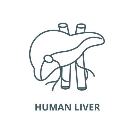Human liver vector line icon, outline concept, linear sign Illustration