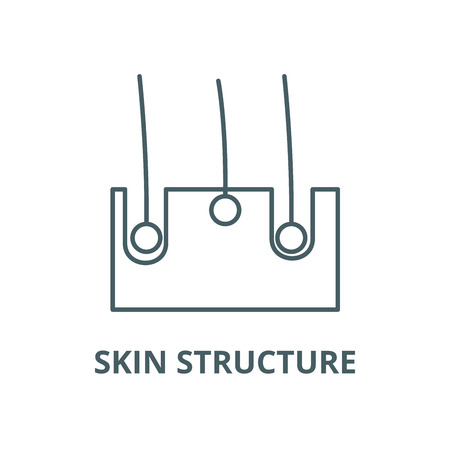 Skin structure vector line icon, outline concept, linear sign Illustration