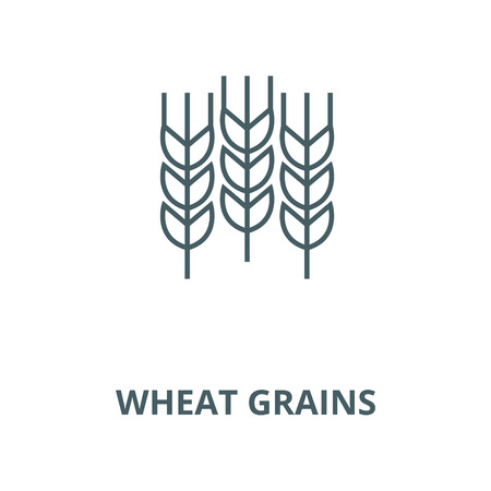 Wheat grains vector line icon, outline concept, linear sign
