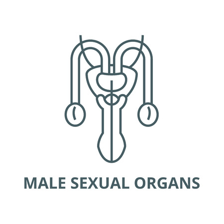 Male sexual organs vector line icon, outline concept, linear sign Illustration