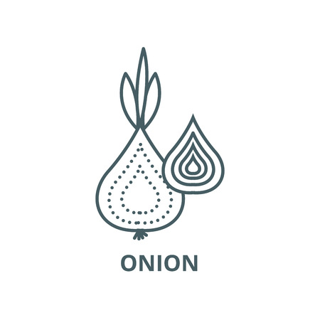 Onion vector line icon, outline concept, linear sign