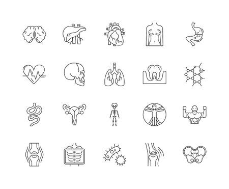 Icone della linea di anatomia, segni lineari, set di vettori, illustrazione del concetto di contorno