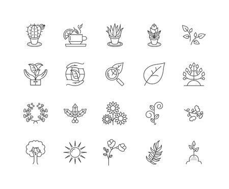 Icônes de ligne de phytothérapie, signes linéaires, ensemble de vecteurs, illustration de concept de contour Vecteurs