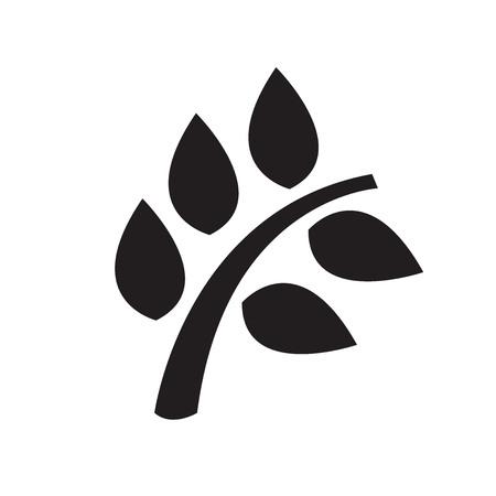 leaf: leaf isolated