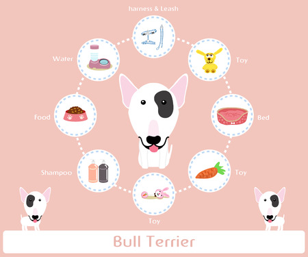Pet Supplies (bull terrier) infographic on warm background - vector set of icons and illustrations