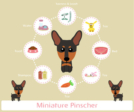 pinscher: Pet Supplies (miniauture pinscher) infographic on warm background - vector set of icons and illustrations Illustration