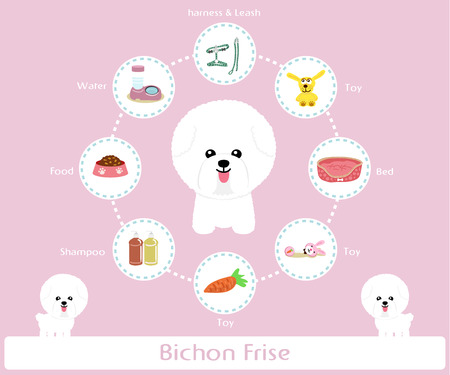 frise: Pet Supplies (bichon frise) infographic on warm background - vector set of icons and illustrations