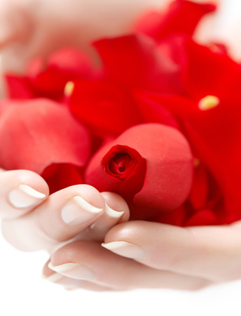 Female hands holding red rose petals.