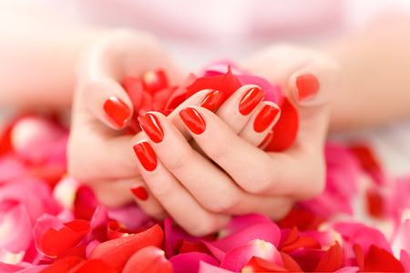 Female hands with red nails holding red and pink rose petals.