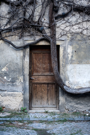 mage: Grungy mage of a door hidden in a stone wall behind old dry tree branches.