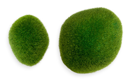 two object: Two chunks of green moss. Isolated object on white background.