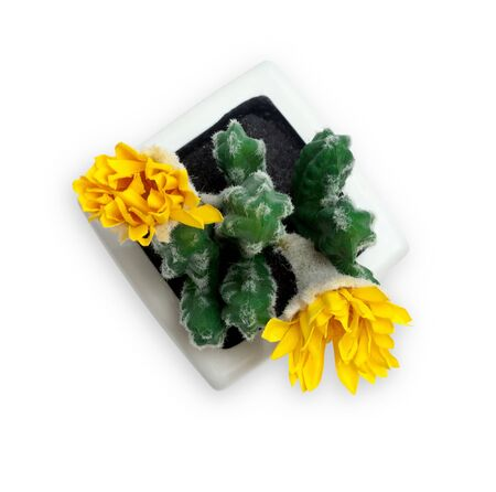 Artificial blossoming cactus in pot. Isolated object on white background.  Banco de Imagens