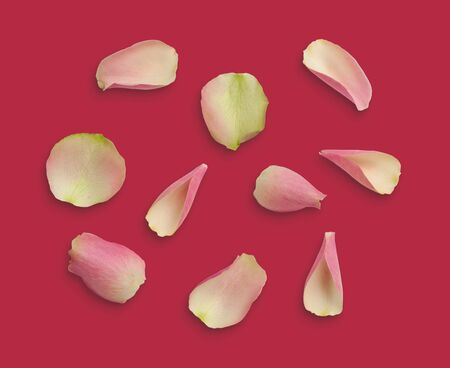 Pink small rose petals on background. Stock Photo