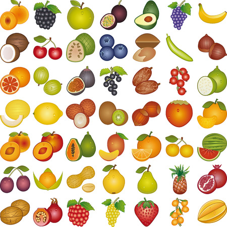 Fruits of the world Vector