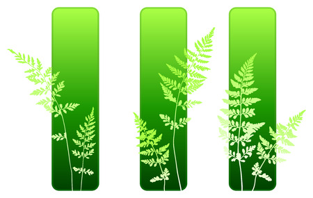 Fern plant green environmental banners  Vector