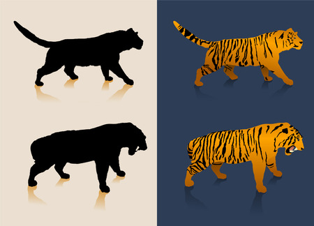 Black and white tiger silhouettes and color images Vector