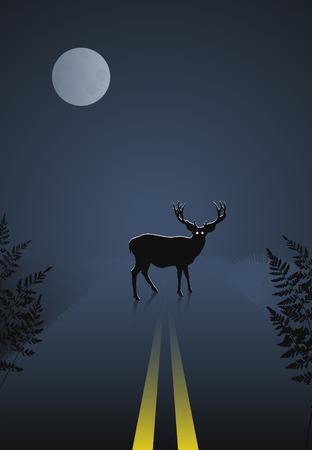 Cervi, attraversare la strada di notte sullo sfondo del cielo e la luna  Archivio Fotografico - 5798808