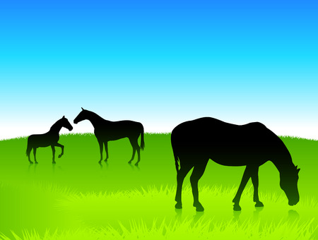 Horses in the green field with blue sky background Ilustração