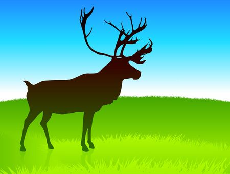 Deer Grazing on Field Original Vector Illustration