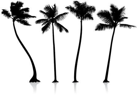 feuille arbre: Origianl Vector Illustration : palm arbres arri�re-plan Le fichier est AI8 compatible  Banque d'images