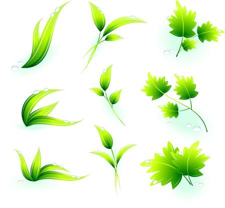 Green Leaves Original Vector Illustration Green Nature Concept