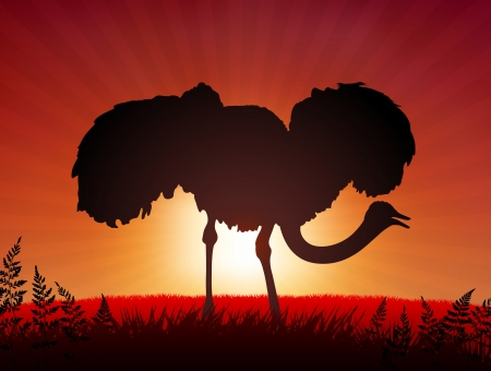 Ostrich on Sunset Background Original Vector Illustration Animals on Sunset Ideal for Wildlife Nature Concepts Çizim