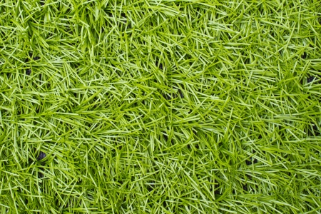 Artificial Green Grass Field Top