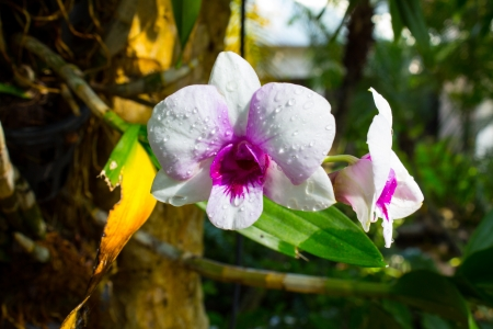 White orchid in the garden photo