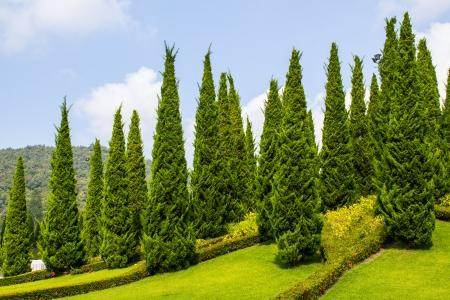Garden with fir trees