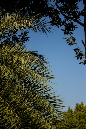 Beautiful palm trees under the sky Stock Photo