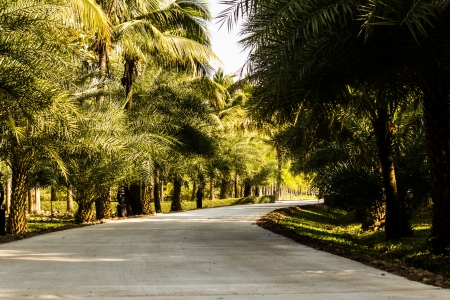 Concrete road in the plam tree Stock Photo