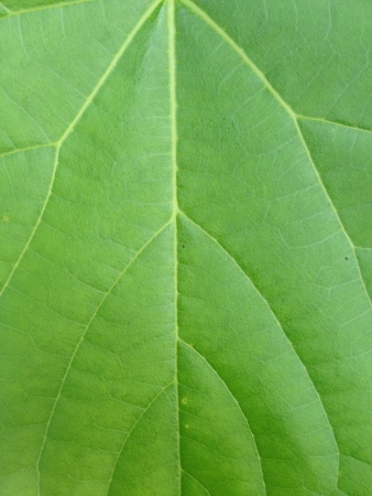 Tropics leaf in thailand