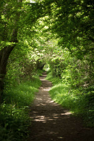 forest path: Long narrow path in a forest