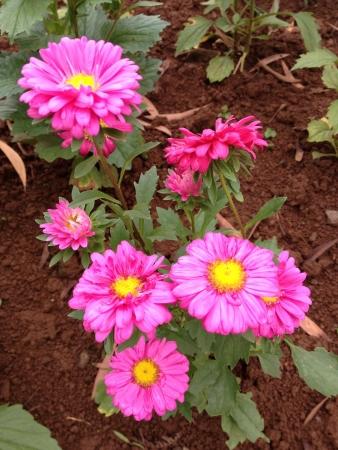 exotic flower: Exotic flower in eden Stock Photo
