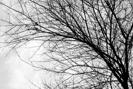 Branch of tree in winter in black and white color photo