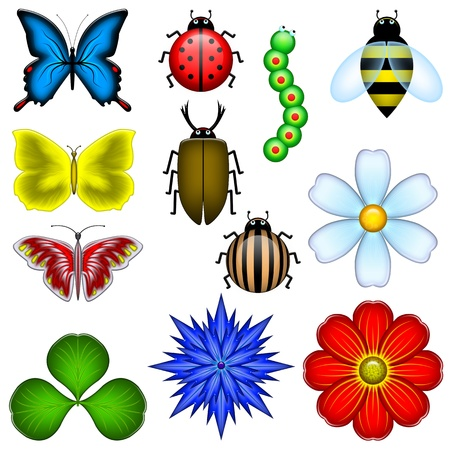12 drawn elements of the nature  the butterfly, flowers, insects  photo