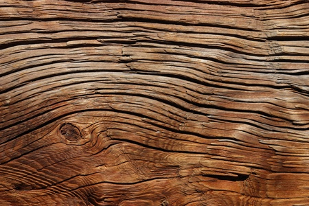 Structure of old wood with a considerable quantity of cracks photo
