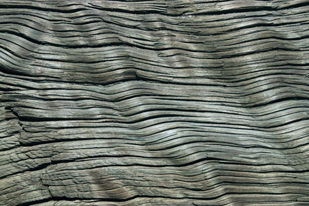 Gray structure of old wood with a considerable quantity of cracks photo