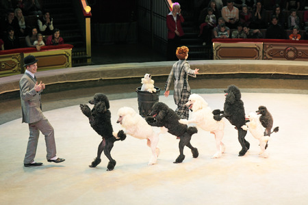 MOSCOW, RUSSIA - NOVEMBER 27: The trained dogs of the Moscow State Circus on November 27, 2011 in Moscow, Russia