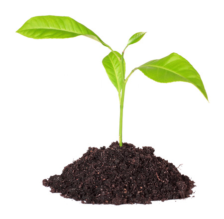 nurseling: Handful of the ground and plant, isolated on a white background Stock Photo