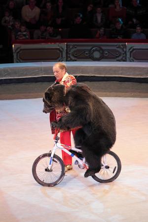 """모스크바, 러시아 -11 월 27 일 : """"황금 담장""""의 프레 젠 테이 션. 모스크바, 러시아에서 2011 년 11 월 27 일에 모스크바 주립 서커스의 자전거에 곰 에디토리얼"""