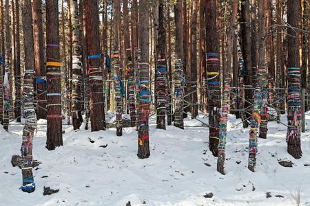 ordenanza: Cintas de colores a los árboles sagrados, cerca del muelle de curación cercana al pueblo de Arshan, la República de Buriatia, en Siberia, Rusia Foto de archivo