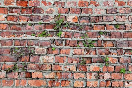 crumbling: The texture of an old brick crumbling walls