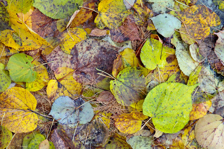 turn away: The background of the fallen autumn leaves