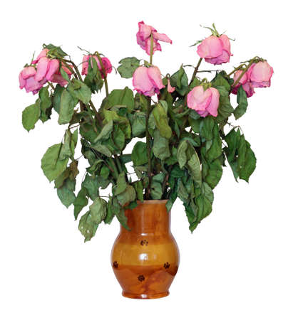 Clay vase with a bouquet of withered roses, isolated on white  photo