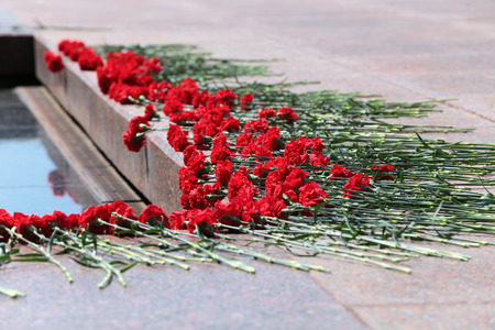 assigned: Moscow, Russia. Red carnations assigned to the memorial Tomb of the Unknown Soldier. Events dedicated to the celebration of Victory Day (WWII)