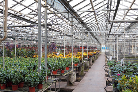 hothouse: Hothouse for a flower cultivation inside