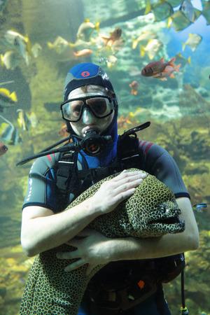 caresses: SOCHI, RUSSIA - FEB 27, 2014: Diver caresses giant Moray in the Oceanarium Riviera Park Editorial