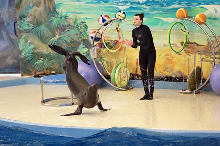 performs: SOCHI, RUSSIA - 27 MAR, 2014: Il Delfinario di Riviera Park. L'istruttore si esibisce con i mammiferi marini - Phocidae