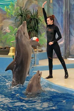 performs: SOCHI, RUSSIA - 27 MAR, 2014: Il Delfinario di Riviera Park. L'istruttore si esibisce con i mammiferi marini - delfini